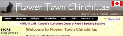 Flower Town Chinchilla
